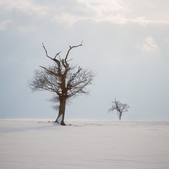 Last men standing (Dave Watts Photography) Tags: colchester essex frost trees cold feb