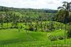 Jatiluwih Rice Terrace 1 (h_haenen) Tags: indonesia jatiluwih rice terrace