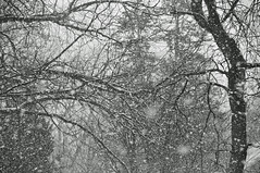 winter's vengeance (christiaan_25) Tags: snow snowfall snowstorm squall snowflakes white black trees branches depth dark light blackandwhite mono monochrome winter march