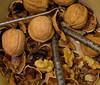 Nuts         L3187582 (LarryJ47) Tags: leicax1 nuts nutcracker dish pick shells walnuts