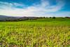 Sessizlik (aliserdardegerli) Tags: zeissmilvus 21mm landscape nikond750 grass nisi soft 06 graduated nisi09softgaruatednd yalova ilyasköy heliopan polarized filter