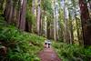 Walking through the Redwoods in California (` Toshio ') Tags: toshio arcadia california northerncalifornia redwoods redwoodstatepark trees path couple boy girl nature fujixe2 xe2