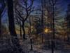 Through the trees (xDigital-Dreamsx) Tags: sunlight sun sunset sunshine sundown sunny trees fence colours countryside woodland landscape coth5