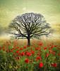1 (Sharksladie1) Tags: tree field poppies poppyfield digitalart digitalpainting flower flowers floral sky