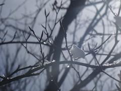 (Joan Pau Inarejos) Tags: osona garrotxa cabrera 2018 febrero invierno catalunya winter neu nieve antológica antológicas antología