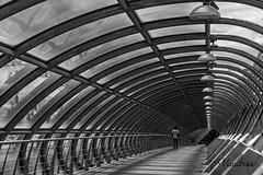 ZGZ201606_199R-BYN_FLK (Valentin Andres) Tags: bw blackwhite blancoynegro byn españa expo2008 milenio milleniums spain white zaragoza black blackandwhite bridge puente tercer third