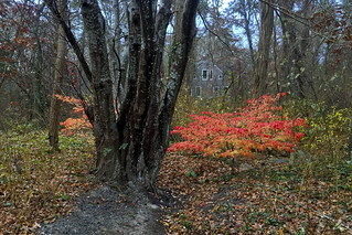 Fall Flames in the Woods