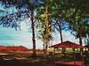 https://www.google.com/maps/place/3%C2%B011'42.4%22N+101%C2%B018'28.4%22E/@3.195111,101.307889,17z?hl=en&gl=gb #travel #holiday #rural #tree #Asian #Malaysia #Selangor #PantaiRemis #travelMalaysia #holidayMalaysia #旅行 #度假 #乡村 #树木 #亚洲 #马来西亚 #雪兰莪 #马来西亚度假 #马 (soonlung81) Tags: 海滩 自游马来西亚 beach 乡村 度假 selangor 树木 马来西亚 malaysia 马来西亚度假 holiday 旅行 亚洲 tree 马来西亚旅行 kampung rural travelmalaysia holidaymalaysia 雪兰莪 pantairemis asian travel