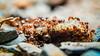 Hormigas (Rodri Valdez) Tags: macro hormigas hormiga ant ants food eating comiendo