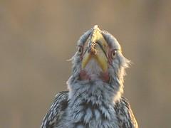 early bird in Kruger Nat Park
