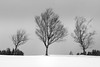 Three Trees (Euan Ross (circa35mm)) Tags: 2018 bridgeofweir d800 february gitzo golfcourse nikon nikond800 renfrewshire scotland snow tripod uk winter landscape mono monochrome landscapes snowday