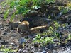 Halona Blowhole & Hanauma Bay Nature Preserve (12) (pensivelaw1) Tags: hawaii oahu halonablowhole hanaumabaynaturepreserve