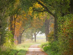 Autumn forest exit (andzwe) Tags: autumn bos forest netherlands nederland dutch drenthe bomen trees path pad curve tunnel boomhaag