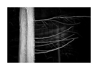 Deep, dark woods