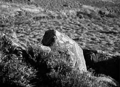 Textures of the High Peak, Derbyshire. (ianneesham) Tags: filmdev:recipe=11729 fomafomapan100 ilfordilfotecddx film:brand=foma film:name=fomafomapan100 film:iso=100 developer:brand=ilford developer:name=ilfordilfotecddx