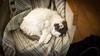 20171219-_OSY8175 (VilleHoo) Tags: tallinn muuricahe muurivahe sauna koti hima home muutto vat cat kissa kissat