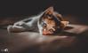 Kitten on the floor (Nvalcke) Tags: cat cats kitten animal cute nicolas valcke blankenberge