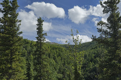 Denali Park, AK  32 (Largeguy1) Tags: approved denalipark ak blue sky clouds landscape canon 5d mark iii