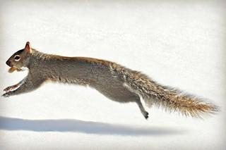 ~Dashing through the snow...