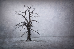 Memento Mori (shawn~white) Tags: aged cold dark decay distressed fog melancholy mystic reflective snow tree weather weathered winter woodland