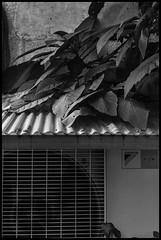 Yanaka, Taitō-ku, Tōkyō-to (GioMagPhotographer) Tags: tōkyōto japonica yanaka taitōku plants leicam9 japanproject japan detail tait taitku tokyo tkyto taitō