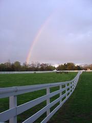 horses under rainbow pasture