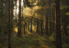 fairytale forest (Lena Held) Tags: forest wood woodland plants trees nature natural rays sunrays sunbeams sunlight sunny sunshine lights landscape morning square squareformat scarf canon 5dsr 1635mm weitwinkel colors colored colorful winter januar wald bäume nebel foggy landschaft natur magical mystical fairytale