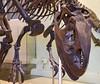 AMNH_022718-042 (bribakove) Tags: 2018 americanmuseumofnaturalhistory dinosaurs nyc upperwestside