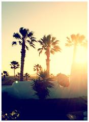 Sunrise in Tenerife (Traveloscopy) Tags: spain tenerife sunrise palms yellow morning summer