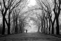 street (photoksenia) Tags: dmcgm5 panasonic ukraine odessa street monochrome fog blackandwhite bw park tree people