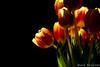 tulip by Zhongyi Mitakon 85mm (wardkeijzer_107) Tags: mitakon zhongyi chinese 85mm lens noautofocus tulips f20 nikon d7200