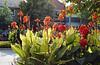 Niagara-on-the-Lake, Ontario (Mark Wordy) Tags: niagaraonthelake ontario cannas flowers queenstreet