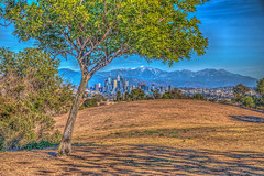 City Under a Tree (Michael F. Nyiri) Tags: city cityscape losangeles california southerncalifornia kennethhahnstaterecreationarea