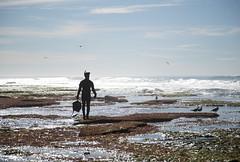 Lobster Diver (Caryn Sandoval) Tags: california tidepools tidepool nature ocean sea sealife sunset