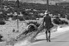 Hard days work (Nicolas Bussieres (Lost Geckos)) Tags: donkey morocco farmer