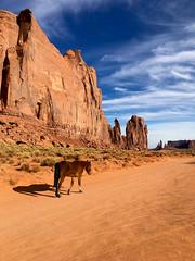 np-442 (SnippyHolloW) Tags: unitedstates us monumentvalley arizona horse oljatomonumentvalley