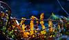 Livingston 15 Jan 2016-0016-Edit.jpg (JamesPDeans.co.uk) Tags: autumn landscape season gb greatbritain livingston prints for sale westlothian landscapeforwalls nature leaves man who has everything sunthroughleaves scotland britain river digital downloads licence wwwjamespdeanscouk unitedkingdom plants riveralmond lothian europe uk james p deans photography digitaldownloadsforlicence jamespdeansphotography printsforsale forthemanwhohaseverything