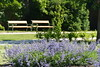 summer garden (Hayashina) Tags: moravia mikulov czechrepublic summer garden flowers green bench hbm