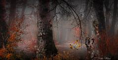 Une journée d'automne en forêt (Didier HEROUX) Tags: automne autumn saison novembre 2017 brume paysage landscape 74 flickr raw didierheroux herouxdidier arbre tree balade randonnée fog extérieur outdoor branche bois sentier hautesavoie france french alpesdunord auvergnerhônealpes le lathuile annecy