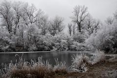 Der Winter ist noch nicht vorbei. (ludwigrudolf232) Tags: raureif