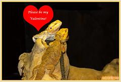 Happy Valentine's Day! (Johann (Sasolburg, RSA.)) Tags: valentine valentinesday makemesmile ef70300mmf456isusm canoneos60d valentynsdag simplysuperb