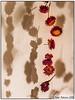 Life in Death (Antirrhinum) Tags: kew gardens art flowers garlands hanging botanical london