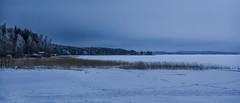 Another winter blues (Joni Mansikka) Tags: nature winter outdoor seabay shore sea ice snow woodland trees reeds landscape harvaluoto piikkiö suomi finland canonef2470mmf28lusm