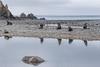 Seal reflections (Travels with Kathleen) Tags: antarctica seals furseals reflections water kinggeorgeisland rock ocean