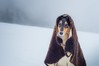 02/12 B Nora, so sweet... (shila009) Tags: nora roughcollie dog portrait winter cold blue fog niebla azul snow nieve 0212b sweet dogphotography 12mfd sheepdog