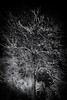Winter Magic – explored (m.a.r.c.i) Tags: fujifilm xe3 samyang12mmf20 stuttgart badenwürttemberg rotenberg württemberg germany marci stuttgartrotenberg nebel mist herbst winter snow schnee bäume wald nightshot