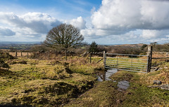 A gate, a tree and a puddle - NK2_4989 (Jean Fry) Tags: dartmoor dartmoornationalpark devon englanduk gates moorland nationalparks trees uk westcountry farmgates puddles baretrees nakedtrees