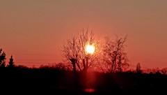 2018-02-22 sunset (5)f (april-mo) Tags: sunset coucherdesoleil nord france villerscampeau trees baretrees orange branches