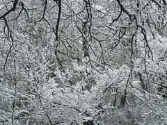 Gabbia di rami e neve - Branches and snow cage (Ola55) Tags: ola55 umbria perugia montetezio neve alberi bosco snow trees wood inverno winter cold freddo italians aplusphoto worldtrekker