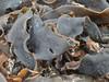Thick Straps (mikecogh) Tags: marrawah seaweed thick straps sand bullkelp rikawa